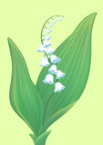 Lily of the valley. Royalty Free Stock Image