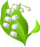 Lily of the valley royalty free illustration