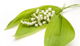 Lily-of-the-valley Stockfotografie
