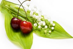 Lily-of-the-valley. White lily-of-the-valley and green leaf Stock Photos