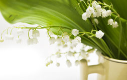 Lily-of-the-valley. White lily-of-the-valley and green leaf Royalty Free Stock Photos