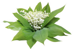 Lily of the valley. Bouquet lily of the valley (isolated Royalty Free Stock Images