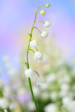 Lily-of-the-valley. Close-up of the lily-of-the-valley Stock Images