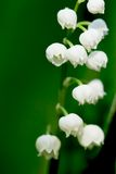 Lily-of-the-valley 2 Imagens de Stock Royalty Free