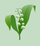 Lily-of-the-valley Stock Photography