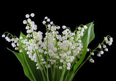 Lily of valley Royalty Free Stock Images