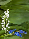 Lily of the valley. Spring card. Lilies of the valley and hyacinths on a green background of leaves Stock Images