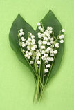 Lily of the valley. On green background Royalty Free Stock Photos