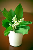 Lily Of The Valley. Blossom, Bloom White, Flower Royalty Free Stock Image