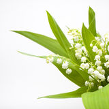 Lily-of-the-valley bouquet Royalty Free Stock Photos