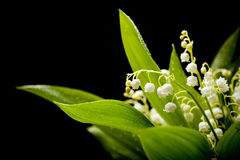 Lily-of-the-valley bouquet Royalty Free Stock Images