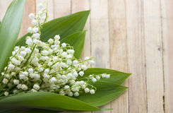 Lily of the valley Stock Image