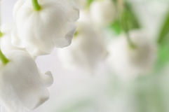 Lily of the valley bouquet close up. Royalty Free Stock Photography