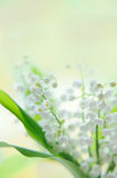 Lily of the valley bouquet Stock Photos
