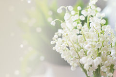 Lily of the valley stock photo