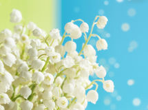 Lily of the valley. Bouquet of the lily of the valley on light background Stock Images