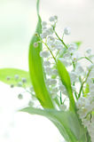 Lily of the valley bouquet Stock Image