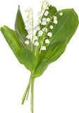 Lily of the valley bouquet on white background Royalty Free Stock Photography