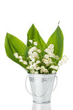 Lily of the valley in a bucket Royalty Free Stock Photos