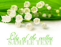 Lily of the valley closeup Stock Photo
