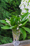 Lily of the Valley(convallaria majalis) Stock Image