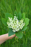 Lily of the valley (convallaria majalis) in hand Royalty Free Stock Photos