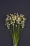 Lily of the Valley (Convallaria Majalis) isolated on dark grey.  Stock Images
