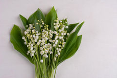 Lily of the Valley (Convallaria Majalis) isolated on grey Royalty Free Stock Images