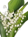 Lily of the Valley - Convallaria Majalis Stock Photography