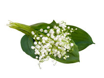 Lily of the valley - convallaria majalis Royalty Free Stock Images