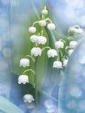 Lily of the valley - convallaria majalis Royalty Free Stock Photos