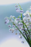 Lily of the valley dream Stock Image