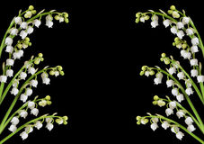Lily of the valley flower background. Lily of the valley background with copy space in center for text stock photography
