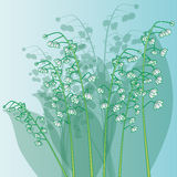 Lily of valley flowers Stock Photo