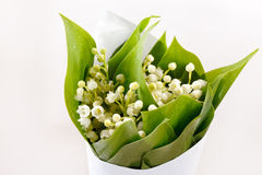 Lily-of-the-valley flowers Royalty Free Stock Photos