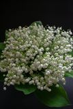 Lily of the valley flowers on a black background 4 royalty free stock images
