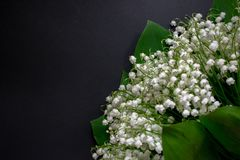 Lily of the valley flowers on a black background 6 stock photo