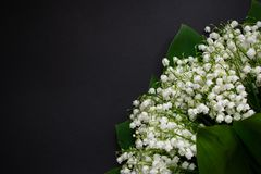 Lily of the valley flowers on a black background 7 royalty free stock images