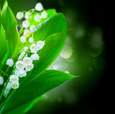 Lily-of-the-valley flowers border design Stock Image