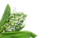 Lily of the valley flowers bouquet on white background Stock Image