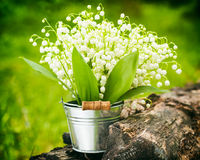 Lily of the valley flowers in bucket in forest Stock Photo