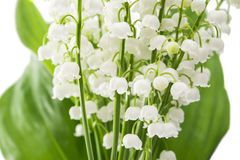 lily of the valley flowers closeup isolated Stock Photography