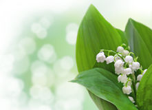 Lily-of-the-valley flowers design Royalty Free Stock Images