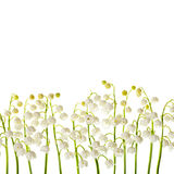 Lily of the valley  flowers isolated border background Royalty Free Stock Images