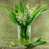 Lily of the valley flowers. Shallow depth of field Royalty Free Stock Photos