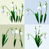 Lily of the valley flowers. Vector illustration of lily of the valley flowers isolated and bouquets sets Royalty Free Stock Images