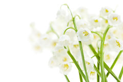 Lily-of-the-valley flowers on white Stock Images