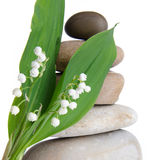 Lily-of-the-valley in front of a pebbles stack Royalty Free Stock Images