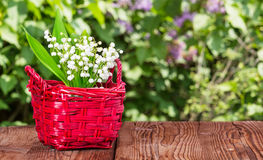 Lily of the valley on garden table in front of lilac Royalty Free Stock Photos