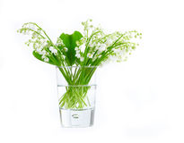 Lily of valley in glass c Royalty Free Stock Images